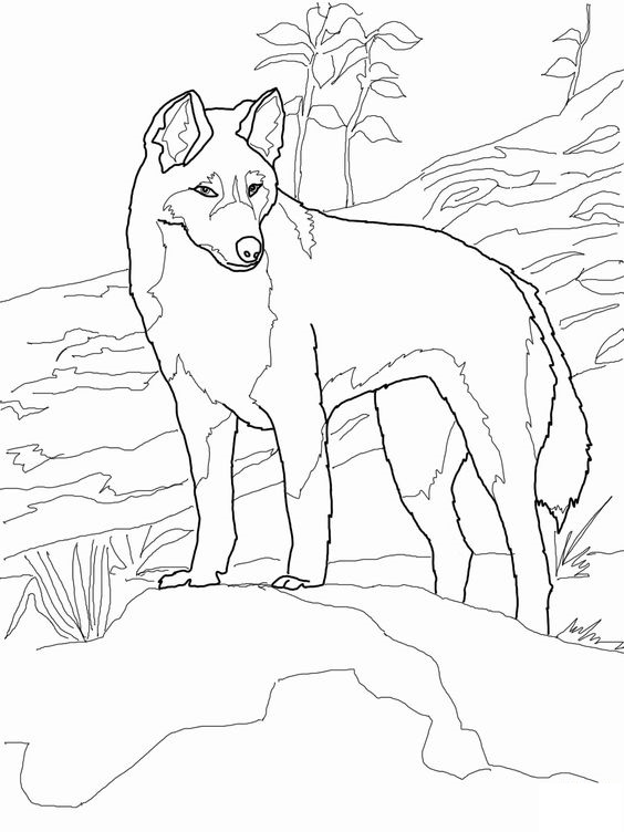 Dogs coloring pages 25