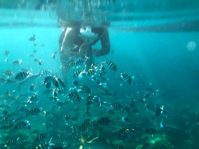 pulau redang, redang island, laguna redang, terenpulau redang, redang island, laguna redang, terengganu, beach holiday in malaysia, gganu, beach holiday in malaysia,