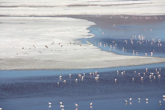 Flamingos e bórax na Laguna Colorada, na Bolívia