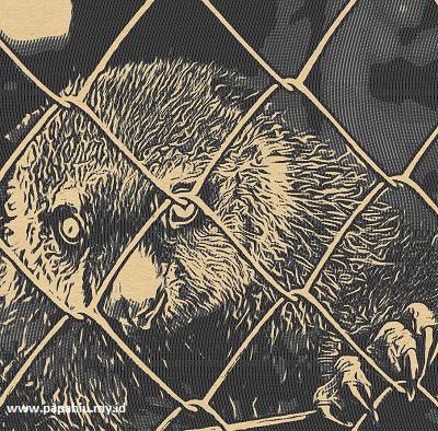 kuskus-beruang-sulawesi-primata-unyu-yang-terancam-punah