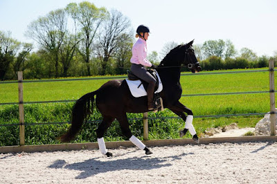 dressage horse, horse riding, equestrian, amanda renouard, flat work, schooling, canter