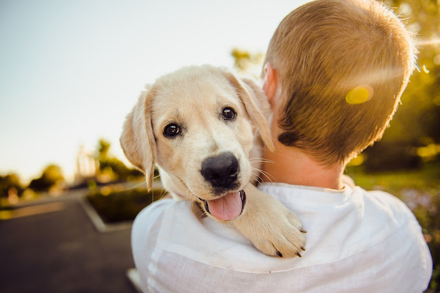 What medication can be given to dogs for pain