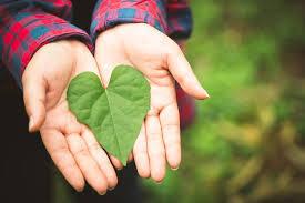 Tips Memulai Green Lifestyle. The Zhemwel