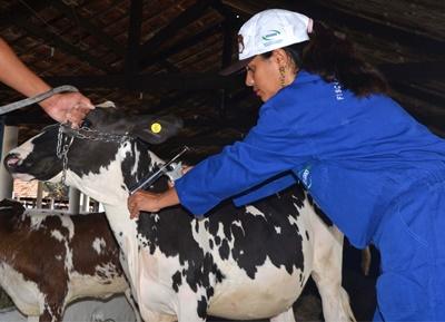 Adagro convoca produtores para segunda etapa de vacinação contra febre aftosa
