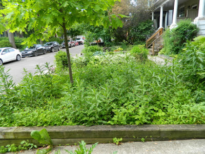 Leslieville Toronto Front Garden Summer Cleanup Before by Paul Jung Gardening Services--a Toronto Organic Gardening Company