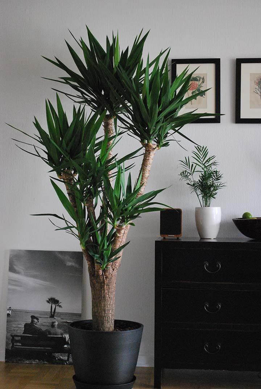 Pokok hiasan dalam rumah
