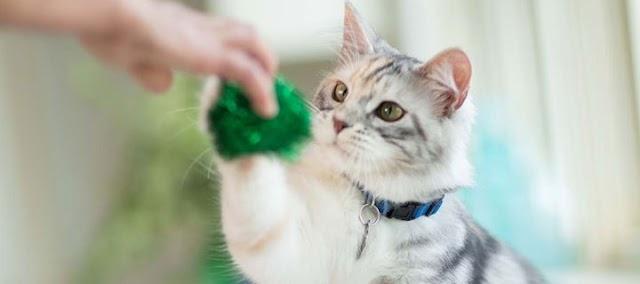 4 τρόποι να βελτιώσεις την υγεία της γάτας σου άμεσα