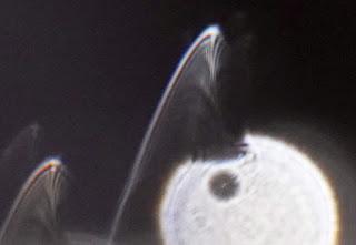 paranormal veils