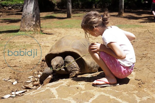 fille qui donne une branche à manger à une tortue géante à la Vanille Nature Park