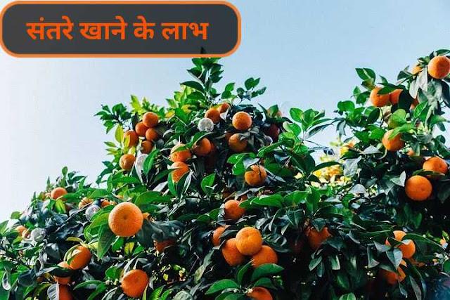 संतरे खाने के लाभ
