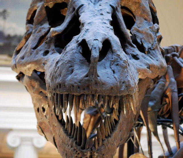 Asteroid Impact, Not Volcanic Activity, Killed the Dinosaurs, Study Finds