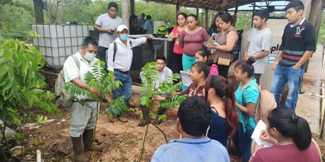 Crece reforestación en Quintana Roo y Yucatán con 35 millones de árboles de Sembrando Vida