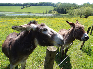 Photograph of Two Donkeys on a Fence Post with Yellow Flowers and Hills by Megan Easley-Walsh, Owner of Extra Ink Edits