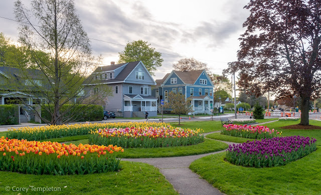 Portland, Maine USA Photo by Corey Templeton. May 2021. Enjoying the tulips in Fessenden Park this morning.