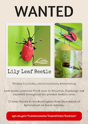 wanted poster for lily leaf beetle