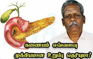 The Pancreas and Its Functions   Maruthuvam