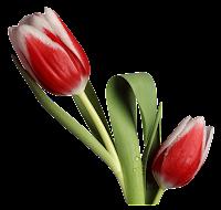 Tulipa vermelha png