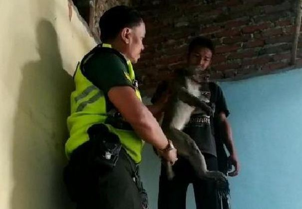 Seekor Monyet Liar Ditembak Mati Saat Acak-acak Rumah Warga di Mojokerto