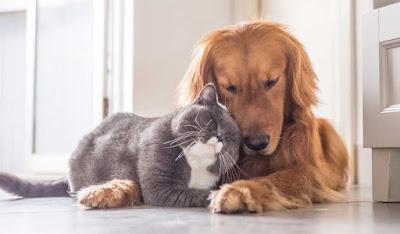 Incrementan las personas que se niegan a vacunar a sus mascotas