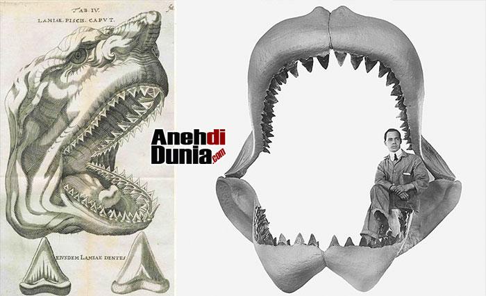 Fosil Megalodon Awalnya Dikira Sebagai Fosil Naga