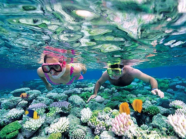 đảo Cỏ Ống lặn ngắm san hô
