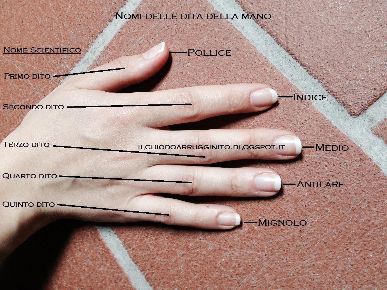 Quali sono i nomi delle dita della mano?