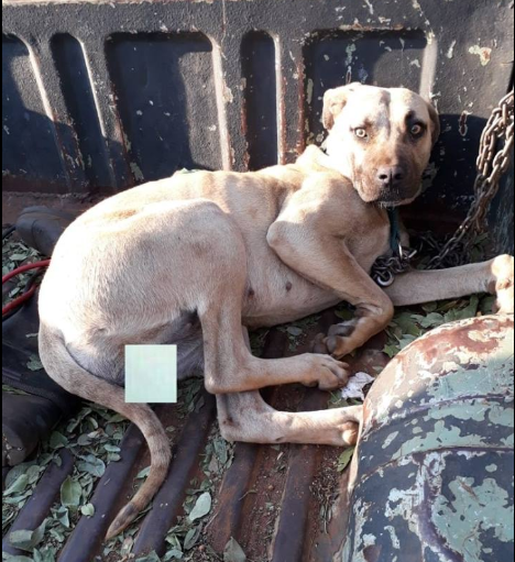 Dog rescued after being tied up and gang raped