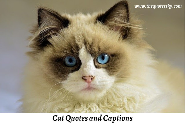 241+ Cute Cat Quotes and Captions For Instagram [ 2021 ]