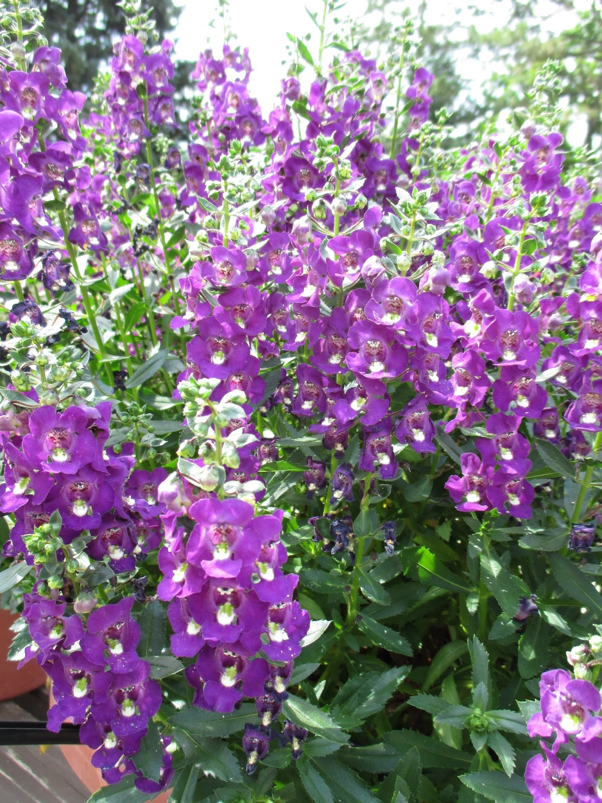 Rotary Botanical Gardens Hort Blog Meritorious Summer