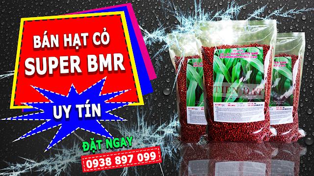 Bán hạt giống cỏ sudan lai super BMR giá rẻ uy tín chất lượng