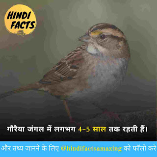 Amazing facts about sparrow in hindi