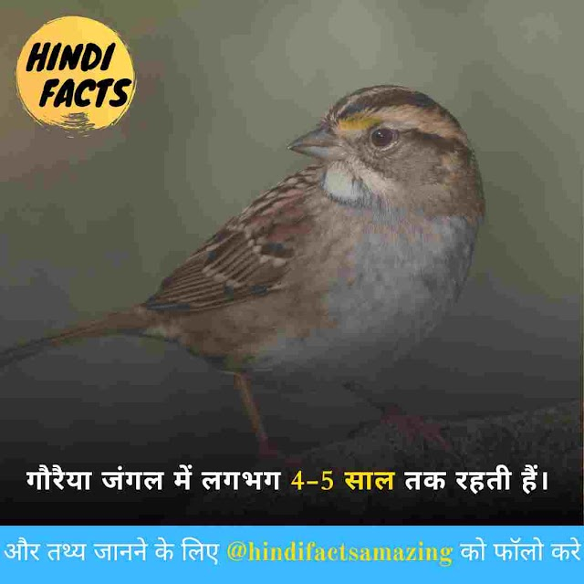 Sparrow in Hindi - गौरैया चिड़िया के बारे में 32 रोचक तथ्य