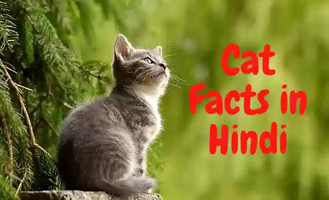 150 Interesting Facts About Cat in Hindi