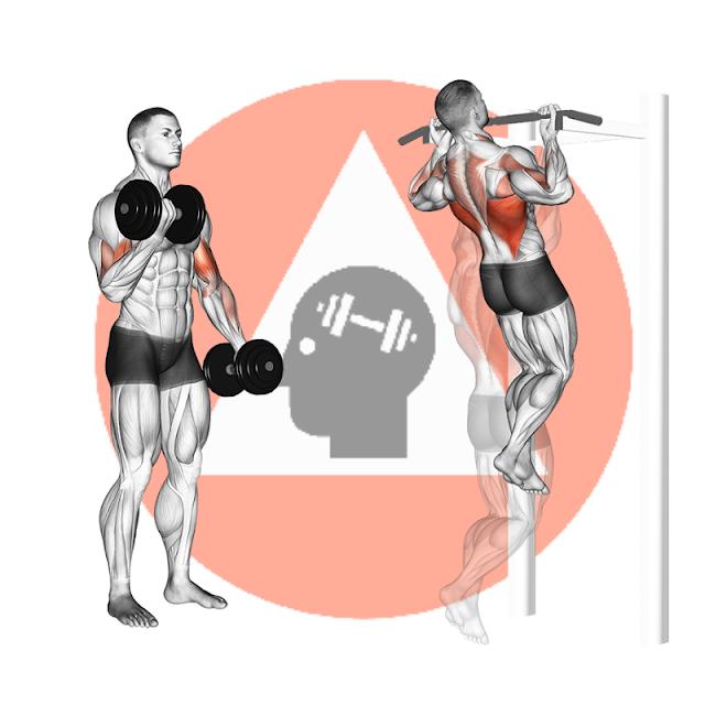 musculation fitness poids du corps haltére biceps dorsaux tractions