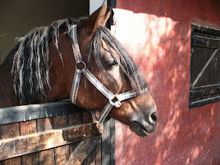 A bay horse looking out of a exterior red stable with a wooden door