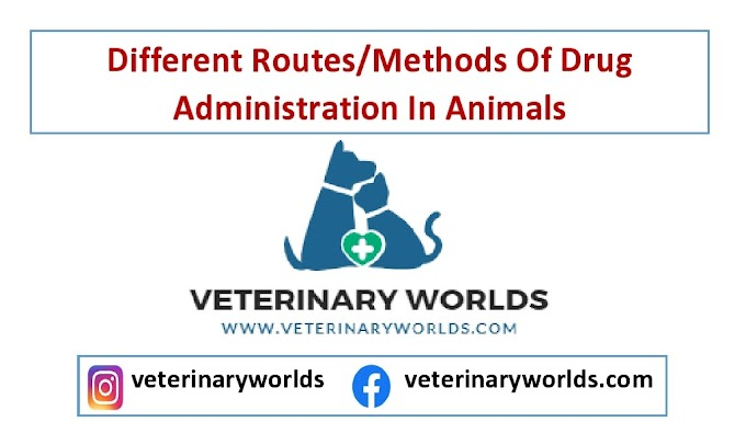 Different Routes/Methods Of Drug Administration In Animals