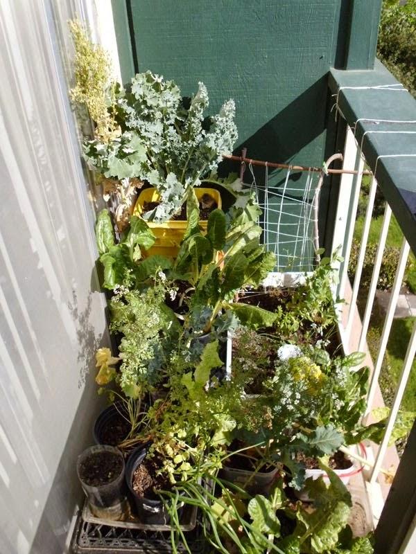Left side balcony garden