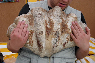 Le plus gros coquillage du monde