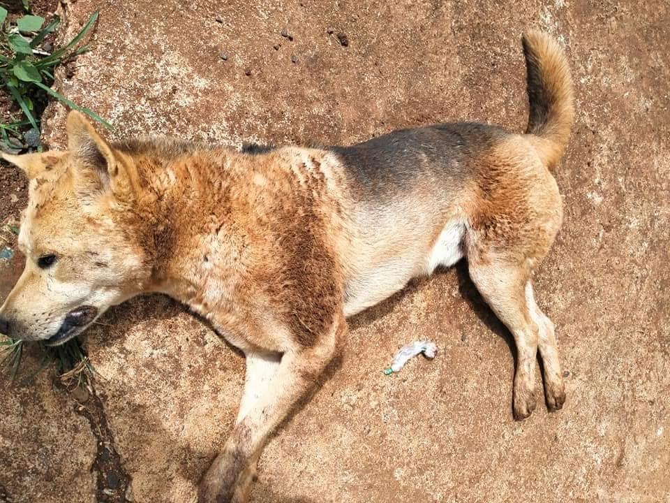 Chó bị đánh bã