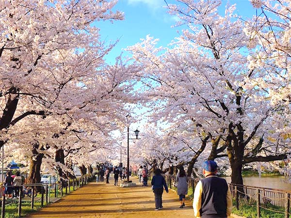 Top 10 beautiful cherry blossom viewing spots in Nagoya of Japan