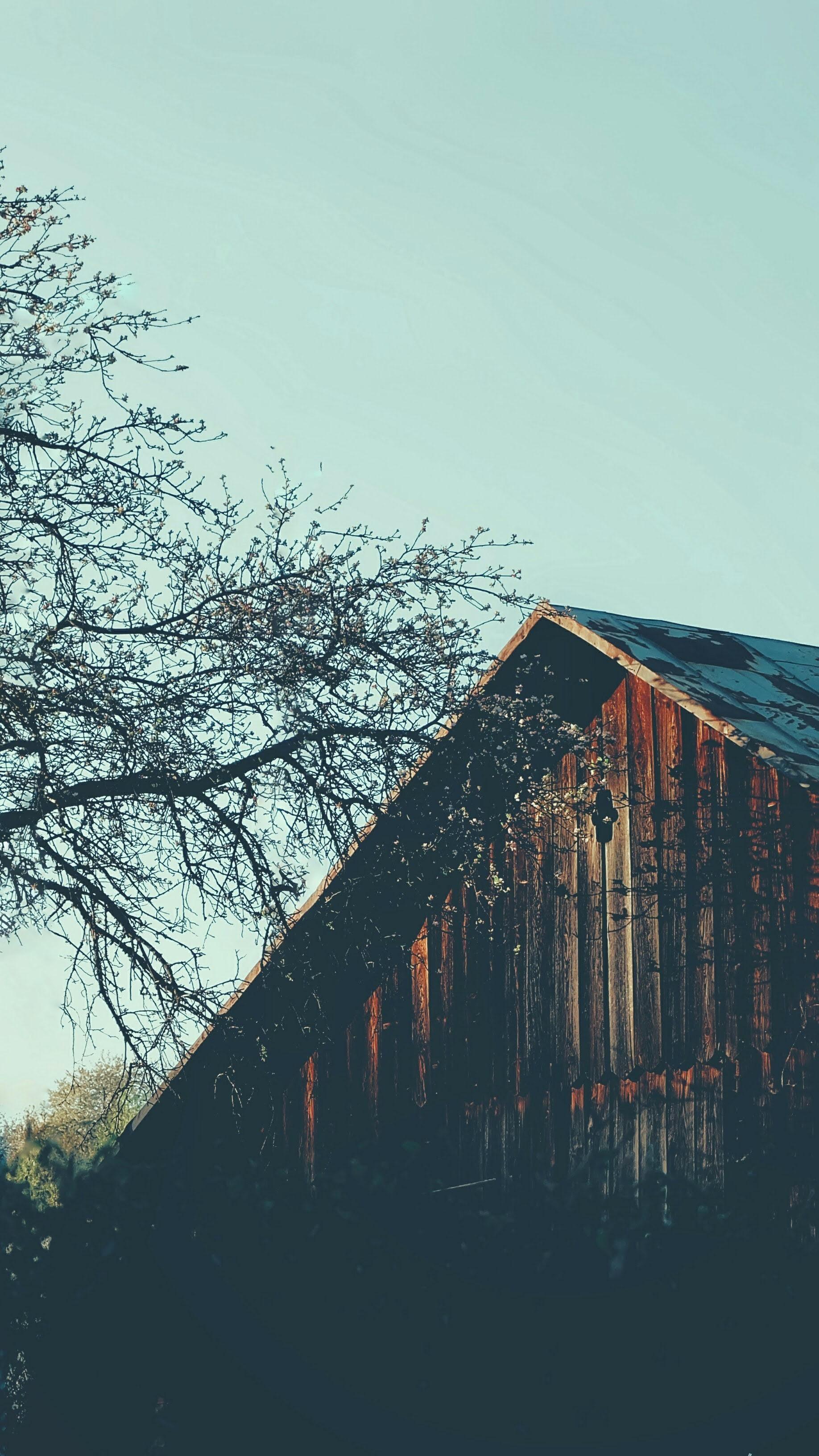 Brown Wooden House Near Bare Tree During Daytime | Photo by Oleksandra Bardash via Unsplash