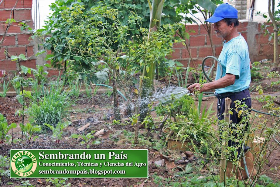 Agricultor Urbano Maximino Mero Mero