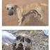Cachorro encontra crânio humano na zona Rural de Cajazeiras