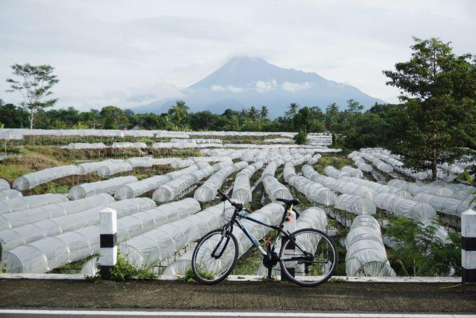 Perkebunan warga berlatarkan gunung Merapi
