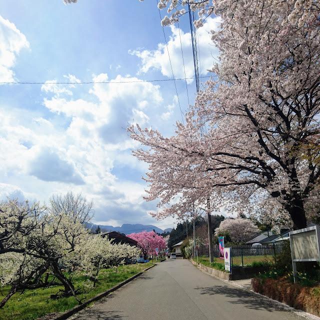 神代桜への道