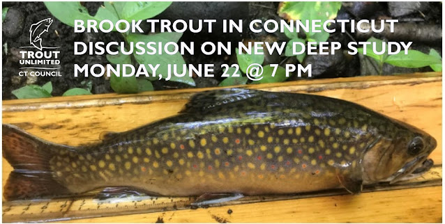 Wild Brook Trout in Connecticut Zoom - June 22nd