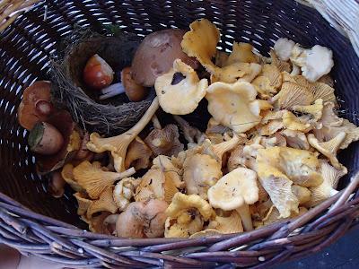 grzyby 2016, grzyby w październiku, grzyby na Orawie, grzyby Babiej Góry