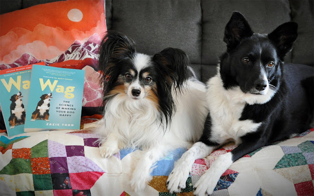 Two cute dogs pose on a settee with copies of Wag: The Science of Making Your  Dog Happy