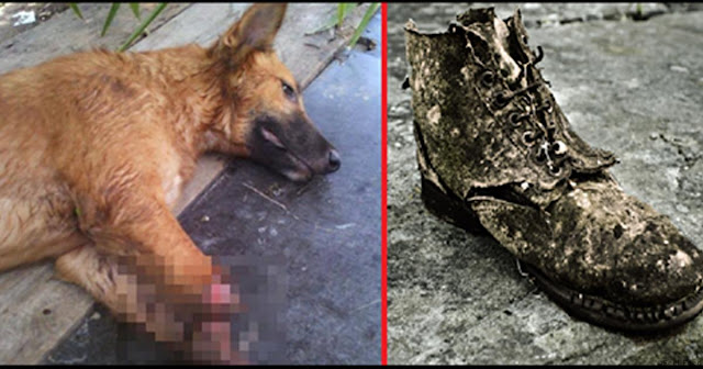 Разгневанный Мужчина Решил Проучить Соседскую Собаку За Изжеванный Ботинок, Отрубив Ей Обе Передние Лапы