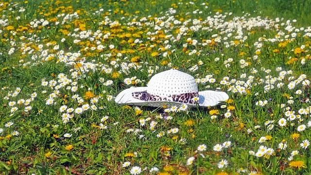 Campo com flores